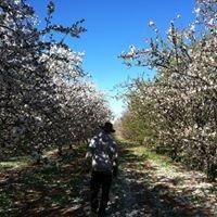 The Almond Farmer