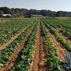THOMPSON FAMILY FARMS
