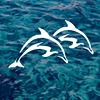 Marina Jack: Sarasota Bayfront