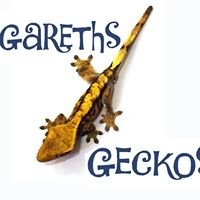 Gareths Geckos