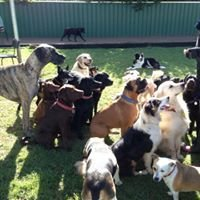 Holdfast Dog Centre