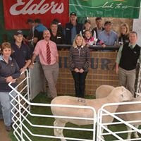 SA White Suffolk Foundation Breeders' Invitation Stud Sale