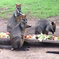 Wirrimbirra Animal Park