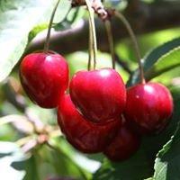 Kerrie's Cherries