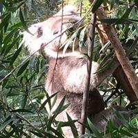 Healesville Animal Sanctuary
