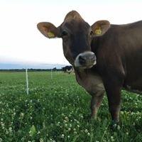 Elsarby Mjölk och Lantbruk