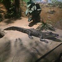 Symbio Wildlife Gardens