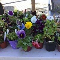 Daz's Dazzling  Plants