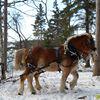 Solar Power Horse Logging