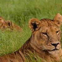 Pioneer Africa - Exclusive Safaris