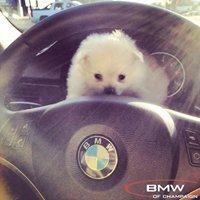 Honda & BMW of Champaign