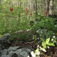 """""""Sanctuary on the Trail,"""" off the Appalachian Trail in Northern Virginia"""