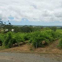 Penny's Hill Winery, Mc Laren Vale, SA