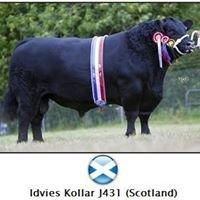 Idvies Aberdeen Angus Herd