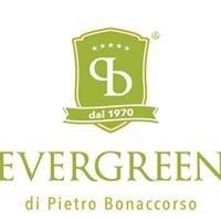 Evergreen di Bonaccorso Pietro