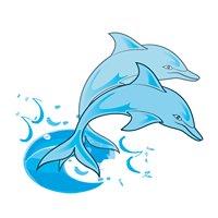 Surf n Dolphin