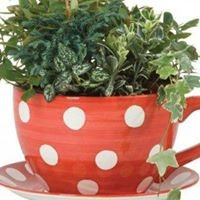 Polka Dot Pots and Plants