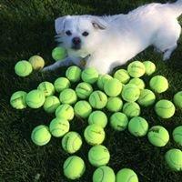 Racquet Master