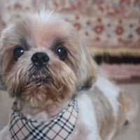 Ivy Herbs Pet Shop