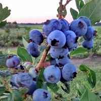 Kerr's Berry Farm