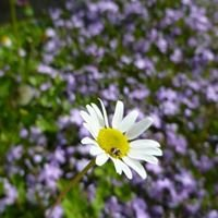 Wildblume Naturkost & Bistro