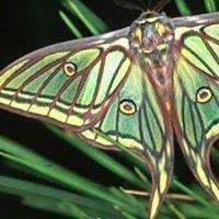 UMD Entomology Student Organization