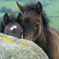 DPTC Pony Rehoming