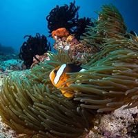 Polskie Centrum Nurkowe Hurghada nurkowanie
