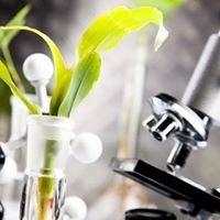 Medycyna Roślin