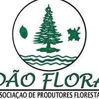 Dão Flora - Associação de Produtores Florestais