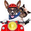 Linora - transport zwierząt psów i kotów Transport of animals dogs cats