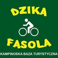 Dzika Fasola - Kampinoska Baza Turystyczna