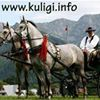 Kuligi.info