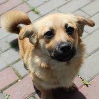 Schronisko dla bezdomnych zwierząt, Útulok pro zvierat, Nowy Targ