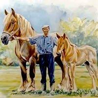 Hodowla koni ardeńskich w Jurkach - Mateusz Kaca