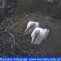 http://www.bociany.edu.pl/