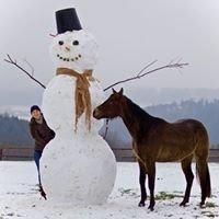 Der Lindenhof - Das Horsemanship Zentrum im Westerwald!