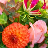Magia Kwiatów