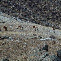 Khustain Nuruu National Park