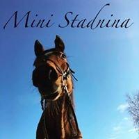 Mini Stadnina