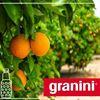 Granini France