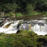 Afon Teifi Caravan & Camping