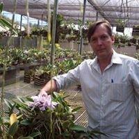 Serra Brasil Orchidaceas
