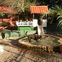 Pet Sitting Day Care & Boarding Villade Perros Costa Rica