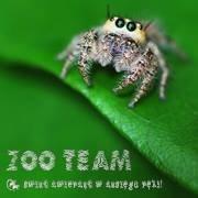 Arachnea - Znawcy Sieci