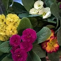 Kwiaciarnia ''Bukiecik''