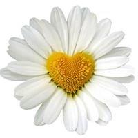 Kwiaciarnia u MAI