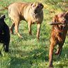 SZERETON - hotel dla psów Pszczyna