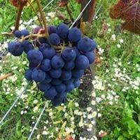 Vada Vini Azienda Agricola