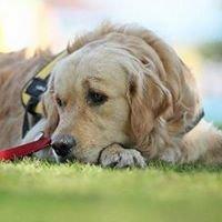 Psia Edukacja Dogoterapia